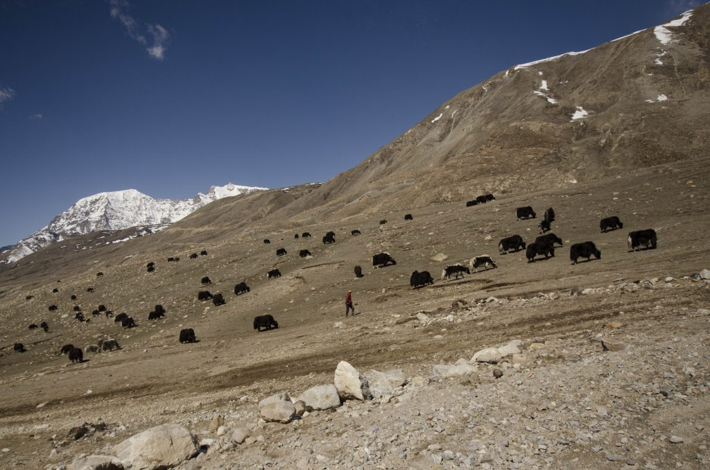 Western Himalaya (WII)